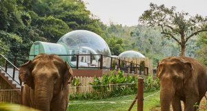 Jungle Bubble, Thailand
