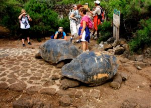 The Tortoises on the Galapagos Islands