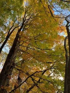 Fall foliage on hike at Miraval Berkshires