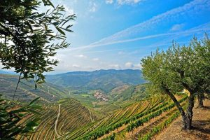 Douro River Cruise with AmaWaterways